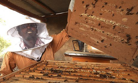 Honey, which is already produced in Tigray, Ethiopia, could provide a livelihood for young adults, of whom 30% in the country are unemployed. Photograph: Matthew Newsome for the Guardian