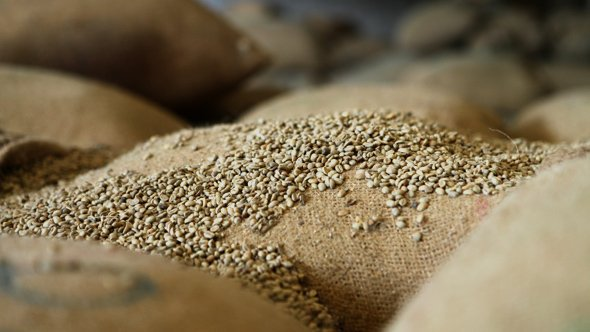 Ethiopia-export-commodities-Coffee-gold-and-fluctuating-prices