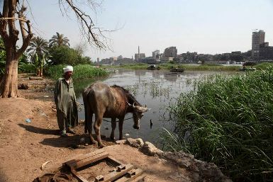 An Egyptian farmer stands by his cow as it takes a drink from the Nile. Egypt fears a massive Ethiopian dam project will ultimately diminish its historic water rights (Photo: Reuters)