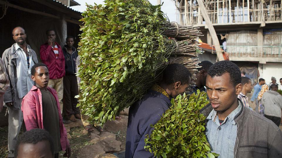 Men carry fresh cut khat for sale at a market in Awaday, Ethiopia, on July 30, 2014 (AFP Photo/Zacharias Abubeker)  Source - Yahoo News