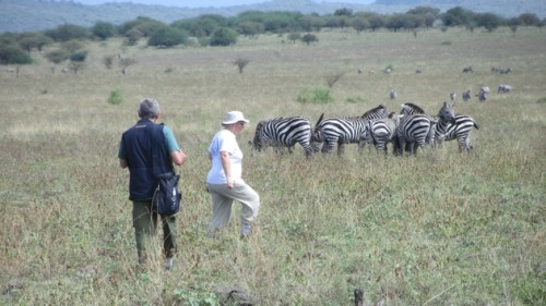 Source -Travel Pulse PHOTO: A bush walk provided the opportunity to come very close to a herd of zebra. (Photo by David Cogswell)
