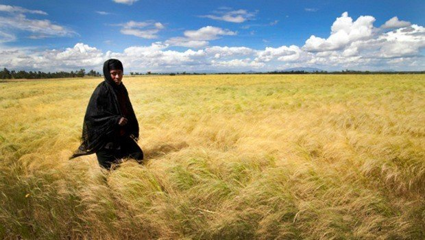 Ethiopia Lifts Ban On Teff Flour Exports With Tight Controls