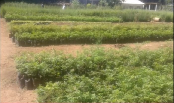 Tree nursery site in Kebena Addis Ababa is given to Meles Zenawi's wife
