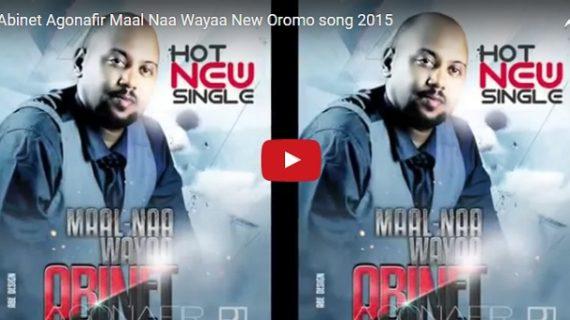 Ethiopian Music : Abinet Agonafir Maal Naa Wayaa Oromo song