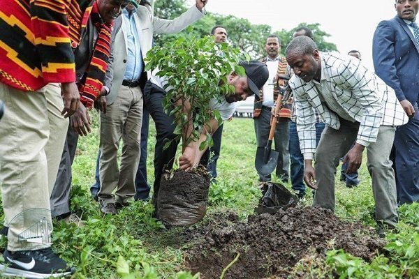Ethiopia planted over 350 millions of trees in a day to fight climate change