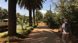 Bahir Dar: Ethiopia's lakeside resort (Claire A Davies)