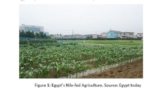Egypt _ Nile _ agriculture