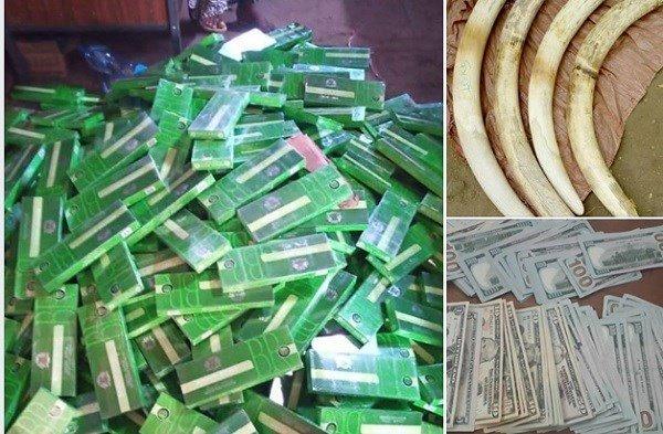 Smuggled Items _ Ivory _ Ethiopia