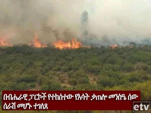 Green legacy _ arsonists _ Ethiopia