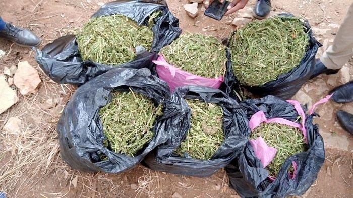 Cannabis _ Ethiopia